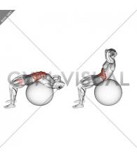 Stability Ball Crunch (Full range hands behind head)