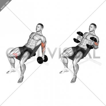 Dumbbell Incline Hammer Curl