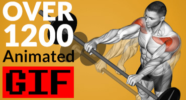 Animated GIFs exercises of fitness and bodybuilding